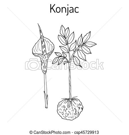 Voodoo clipart love Clip plant of Elephant drawn