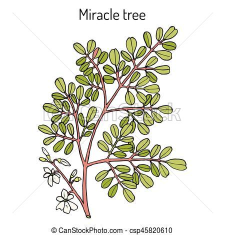 Medicinal clipart teddy bear Plant Miracle medicinal of tree