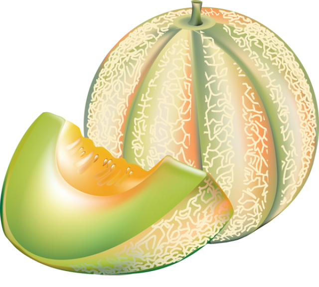 Melon clipart Art Free Download Clipart Free