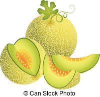 Melon clipart And Clipart  Cantaloupe vectorial