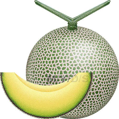 Melon clipart Clip art / Melon clipart