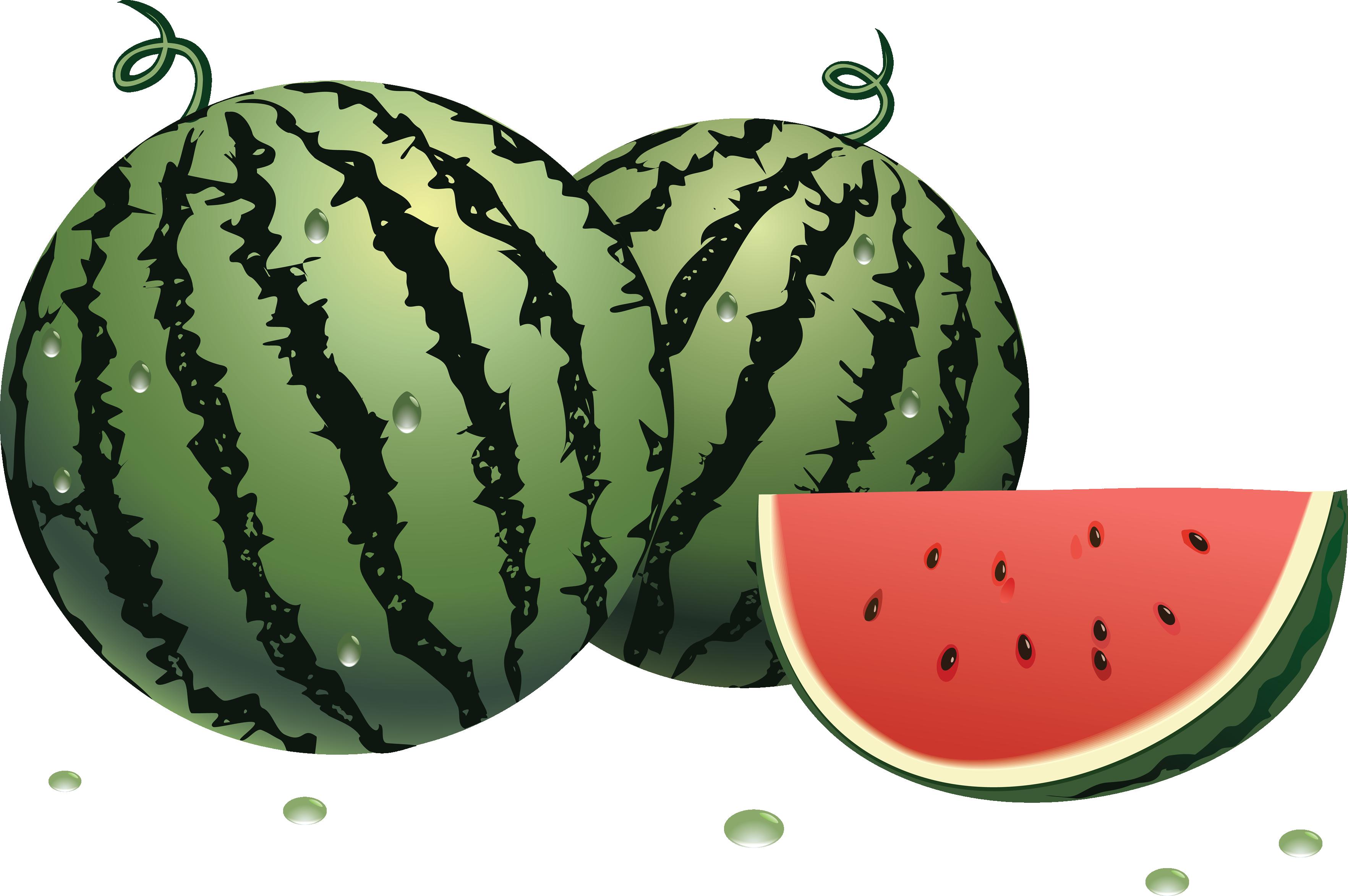 Melon clipart watermelon fruit Download images image PNG watermelon