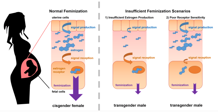 Message clipart scenario Underlying transgenderism sufficient US science