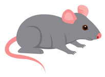 Science clipart mouse Free Kb pink Clipart Art