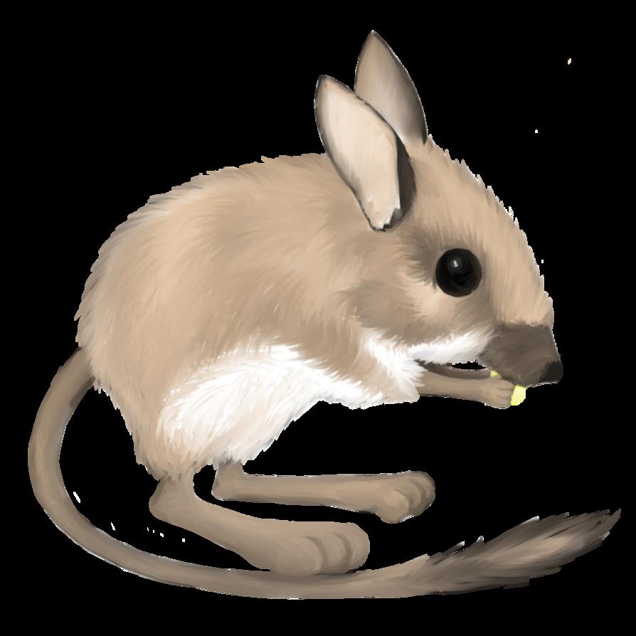 Drawn rat kangaroo rat Drawing Drawing Rat Kangaroo Rat