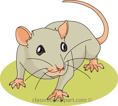 Rat clipart mouse animal #10