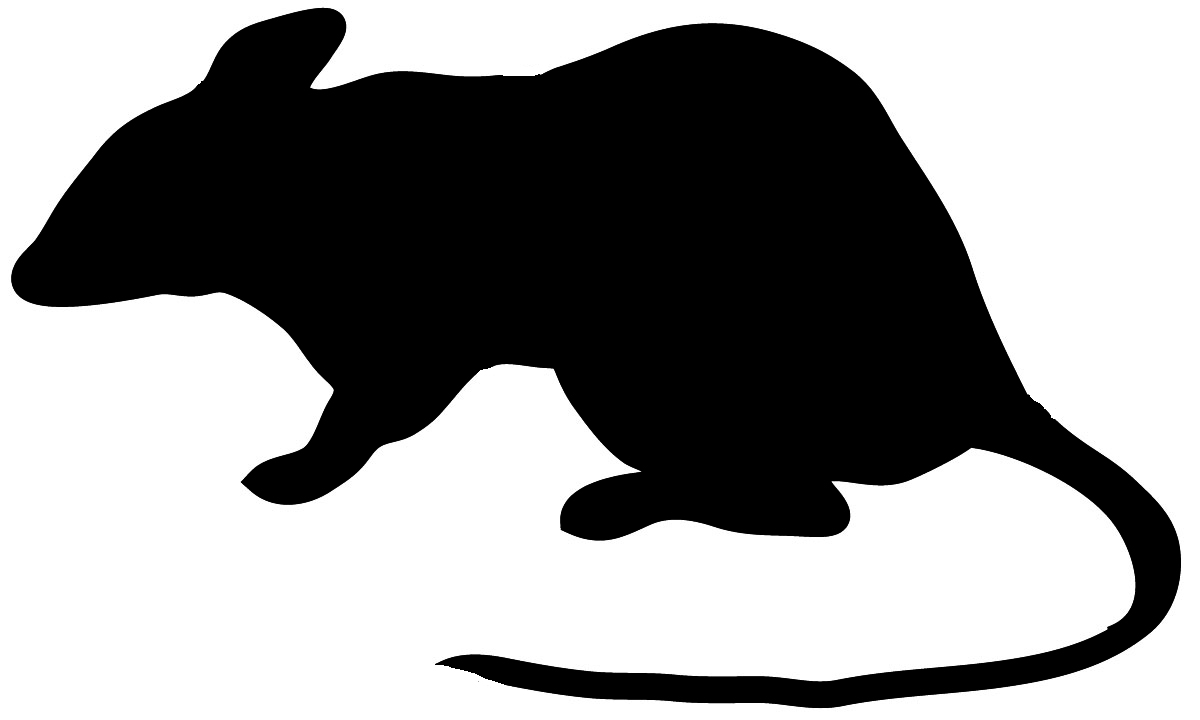 Rat clipart mouse animal #3