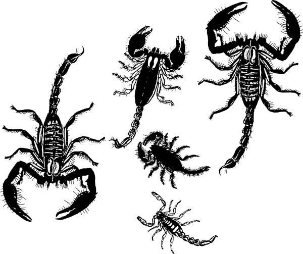 Millipede clipart Scorpion Clipart Digital printable clipart nature stamps