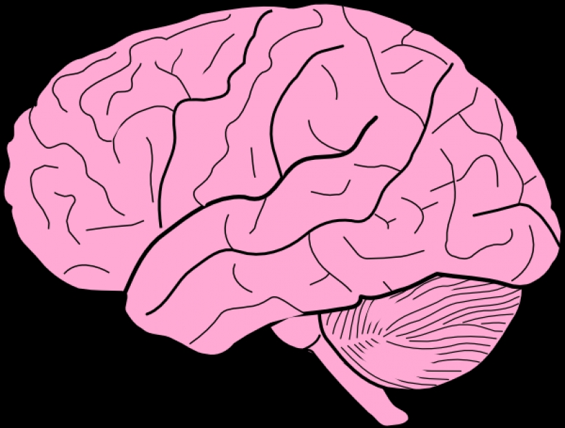Moving clipart brain Art Download brain of Animated