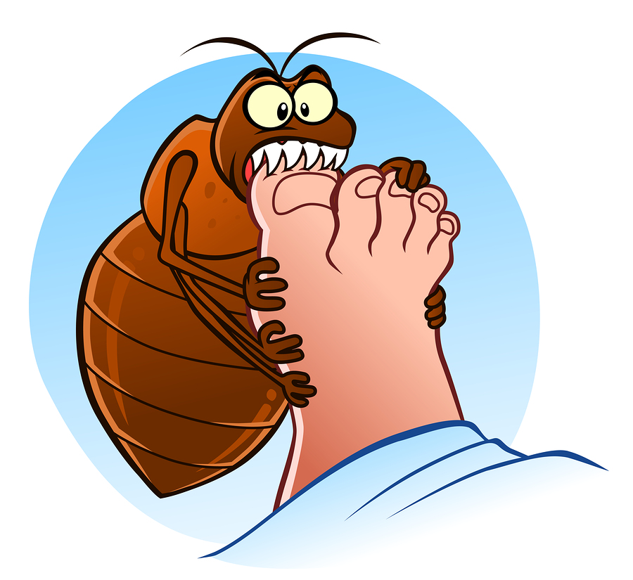 Bugs clipart bed bug An Side Your into Infestation