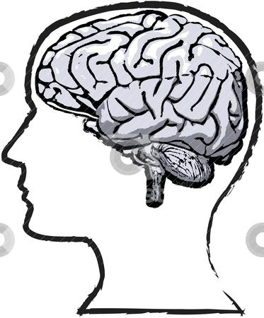 Brains clipart head clipart Brain Human Clipart Clipart Clipartion