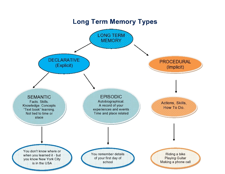 Brains clipart long term memory To Short Chart Store or