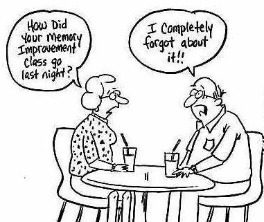 Brains clipart long term memory Long  art term memory