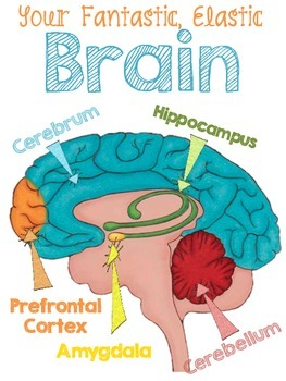 Mind clipart mindset Parts Colorful the posters brain