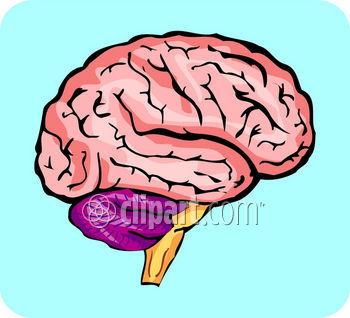 Anatomy clipart neurology #3