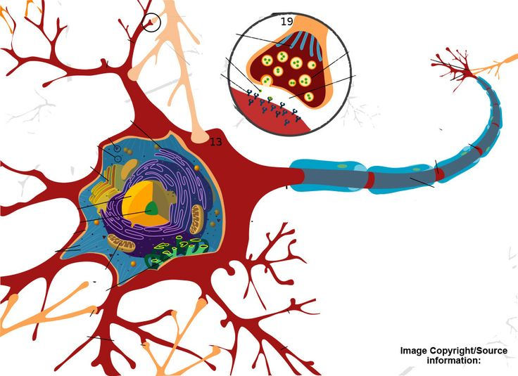 Mind clipart part the brain 447 images and Mind