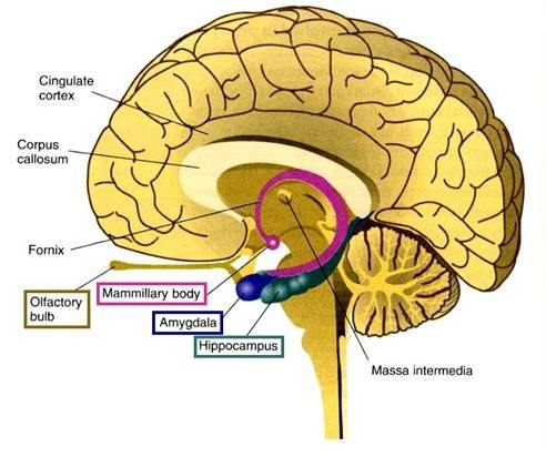 Mind clipart part the brain The function form is what