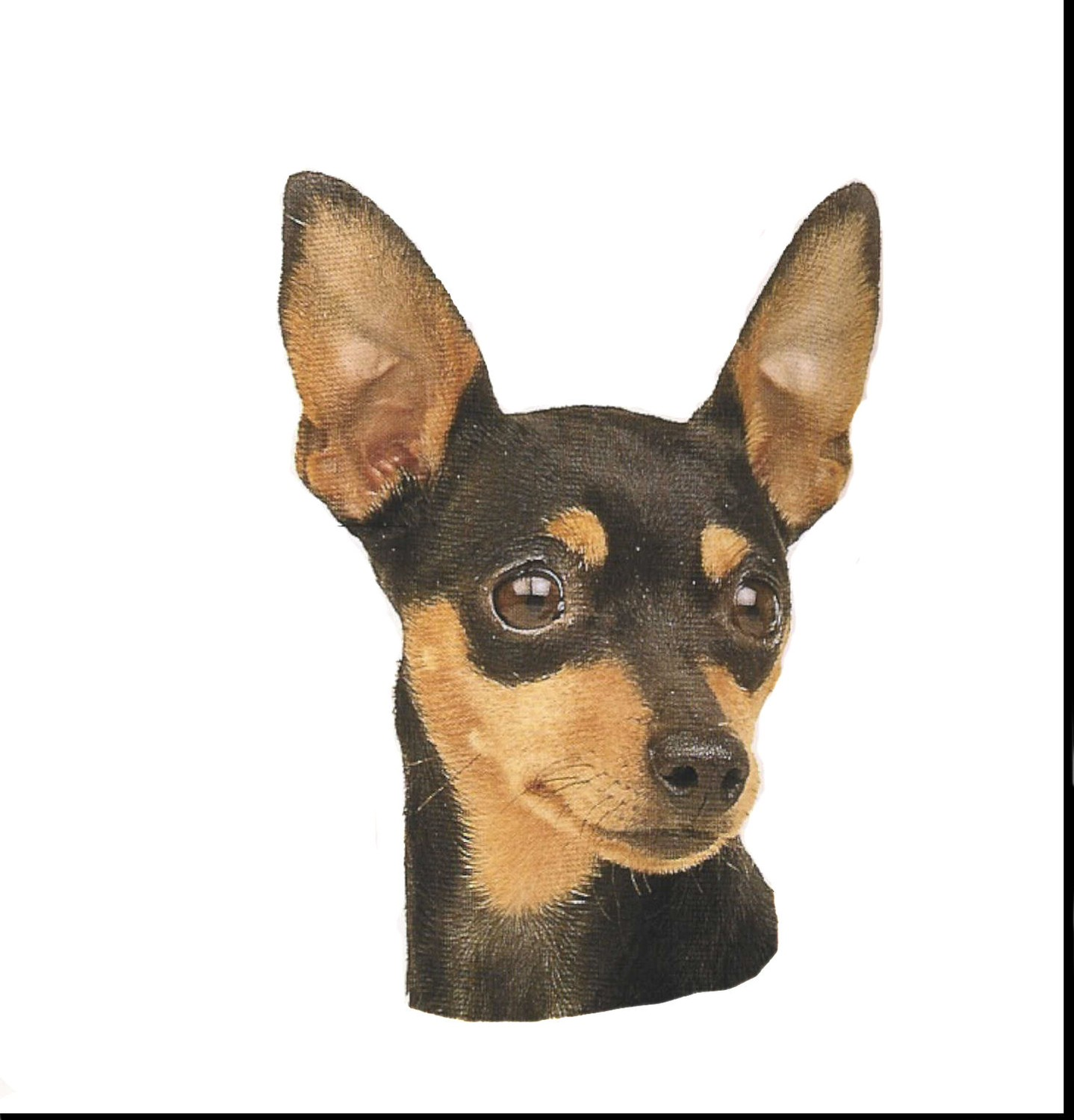 Miniature Pinscher clipart mini #5