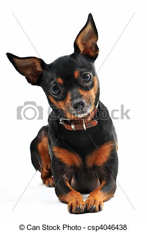 Miniature Pinscher clipart mini #11