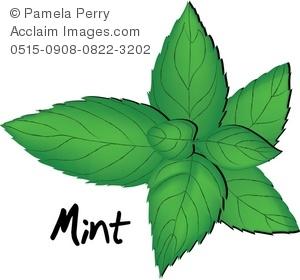 Mint clipart Mint Illustration Clip of Leaves