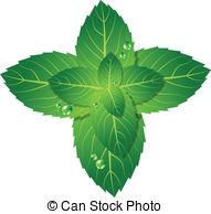 Mint clipart Picture 750 leaf 12