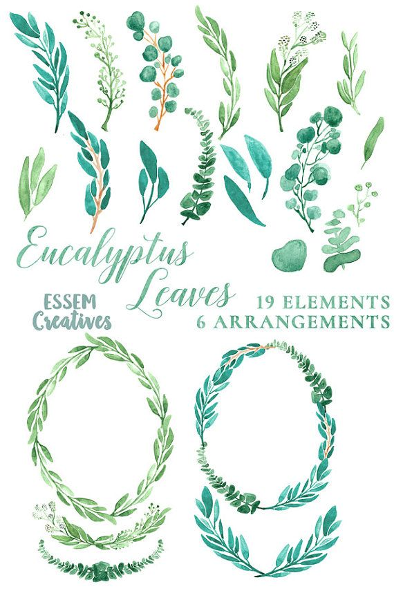 Mint clipart green leave Branch Elegant Clipart Clipart &