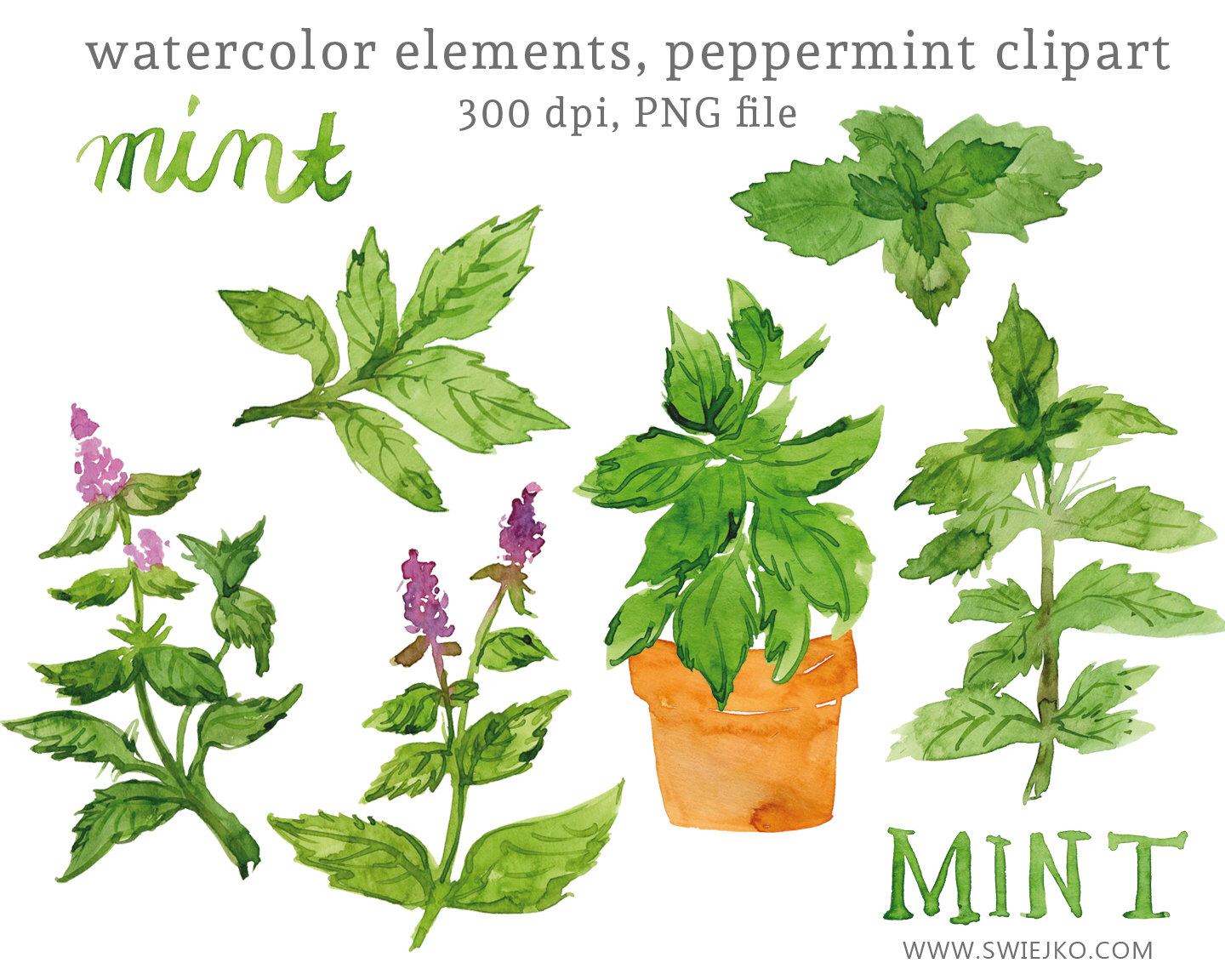Mint clipart herb  Art Watercolor Watercolor Leaves