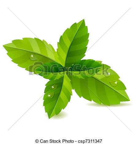 Mint clipart vector  green Illustration background green