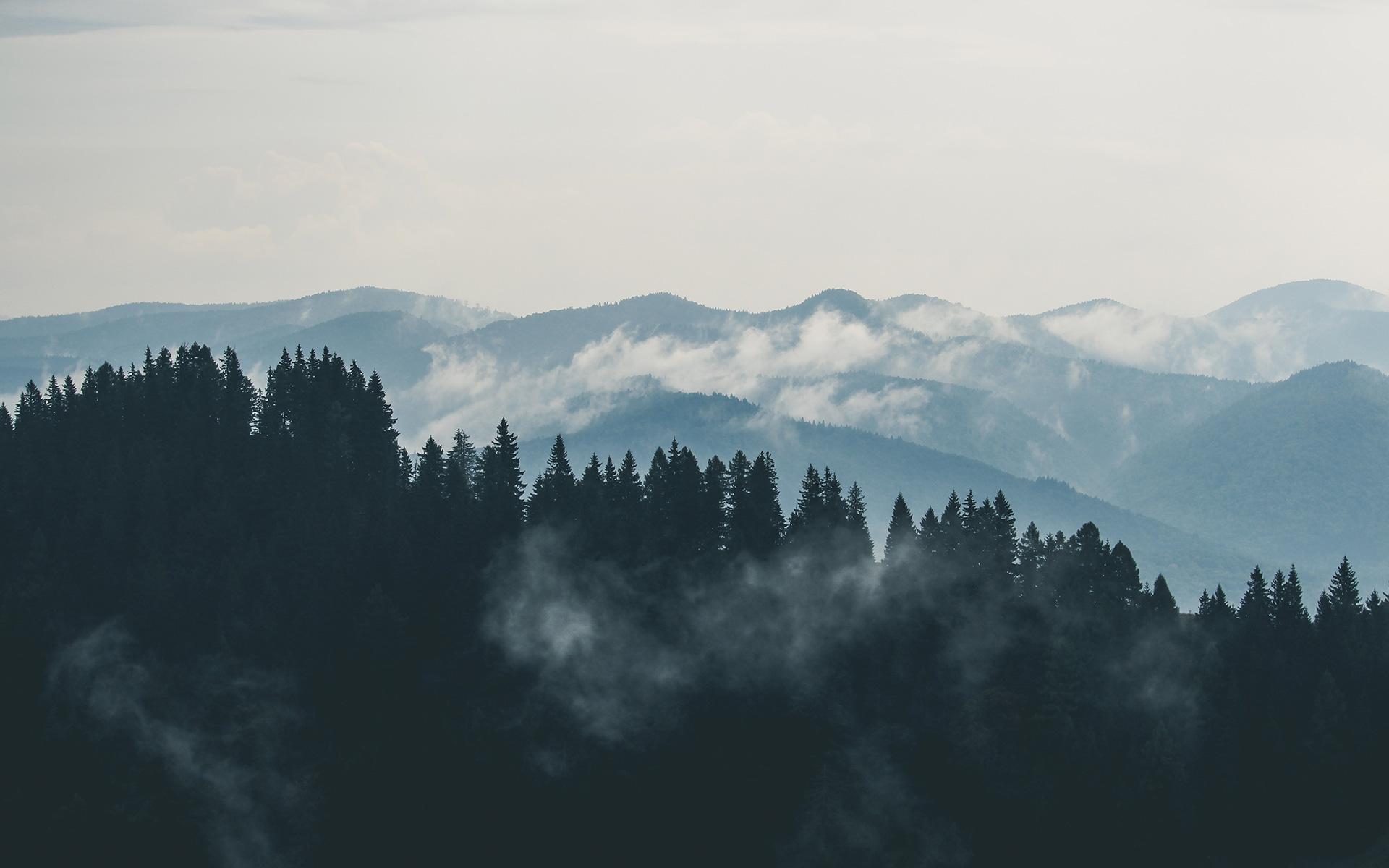 Mist clipart the mountain Fog stock Mountain · Pexels