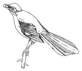 Mockingbird clipart #8