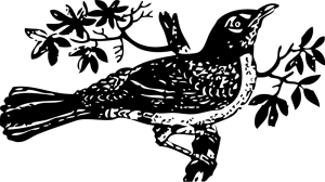 Mockingbird clipart #11