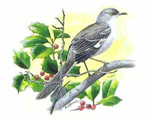 Mockingbird clipart #14