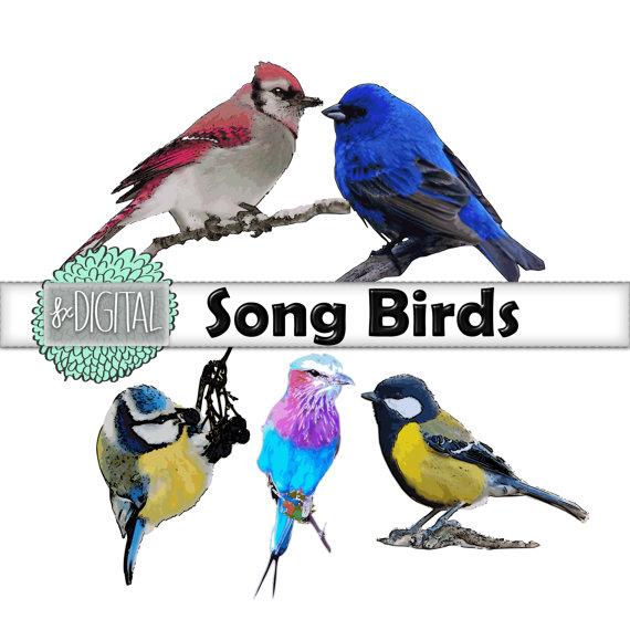 Mockingbird clipart sparrow Bird Art this Art Swallow