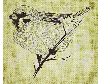 Mockingbird clipart sparrow Art Clip Etsy DOWNLOAD Download
