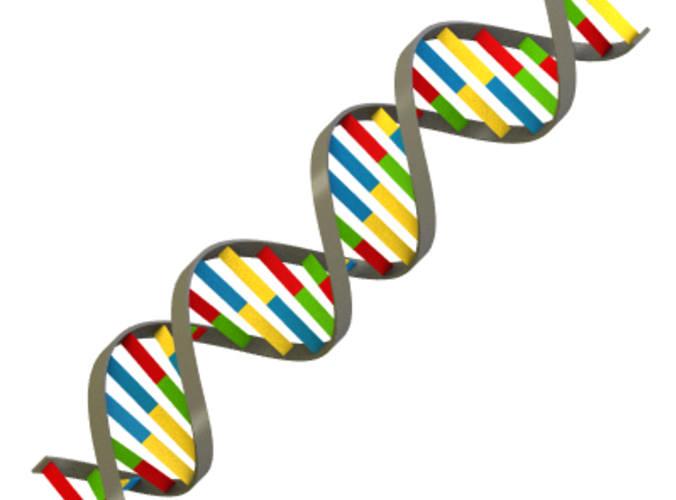 3D clipart dna Simple Strand Model DNA strand