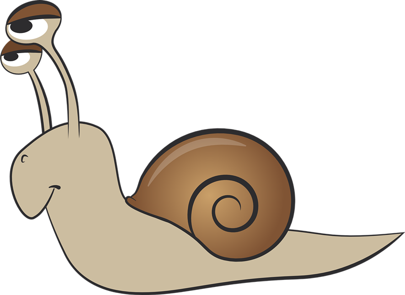 Mollusc clipart To clipart Clipart use clipart