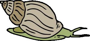 Mollusc clipart Mollusc Download Clip Art Lumaca