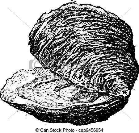 Mollusc clipart clam #6