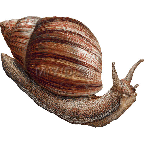 Mollusc clipart land animal #5