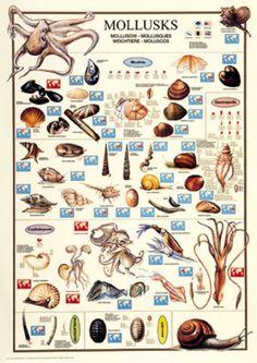 Mollusc clipart land animal #9