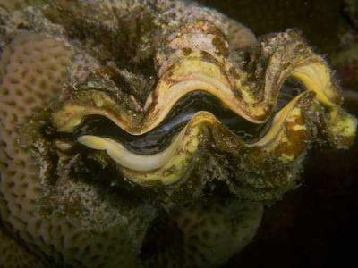 Mollusc clipart land animal #10