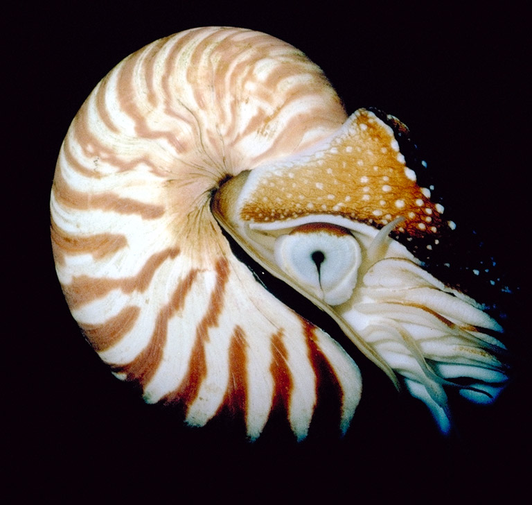 Mollusc clipart land animal #8