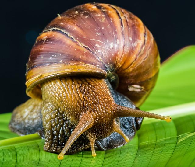 Mollusc clipart land animal #11