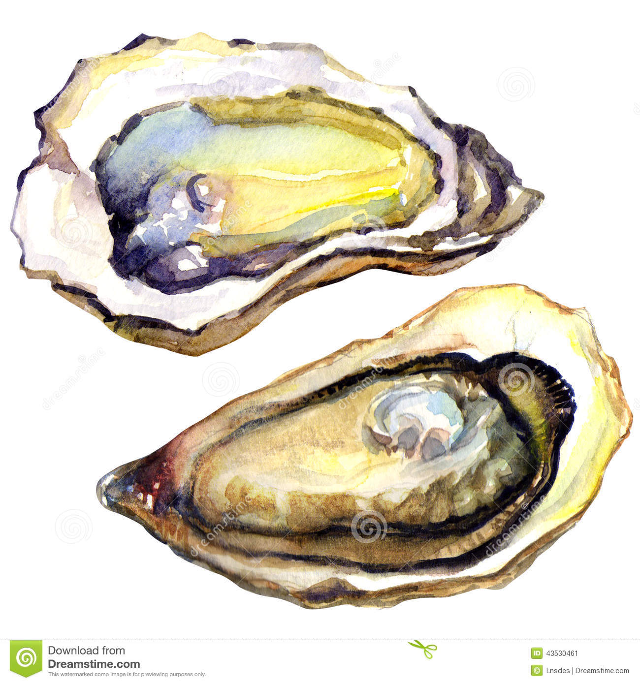 Oyster clipart Clipart 70 oyster