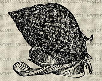 Mollusc clipart sea snail Sea shell Graphic Etsy Instant
