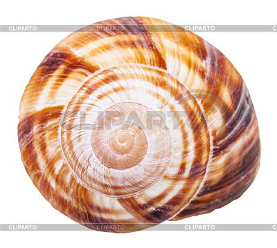 Mollusc clipart sea snail Spiral 4 Vektor snail EPS