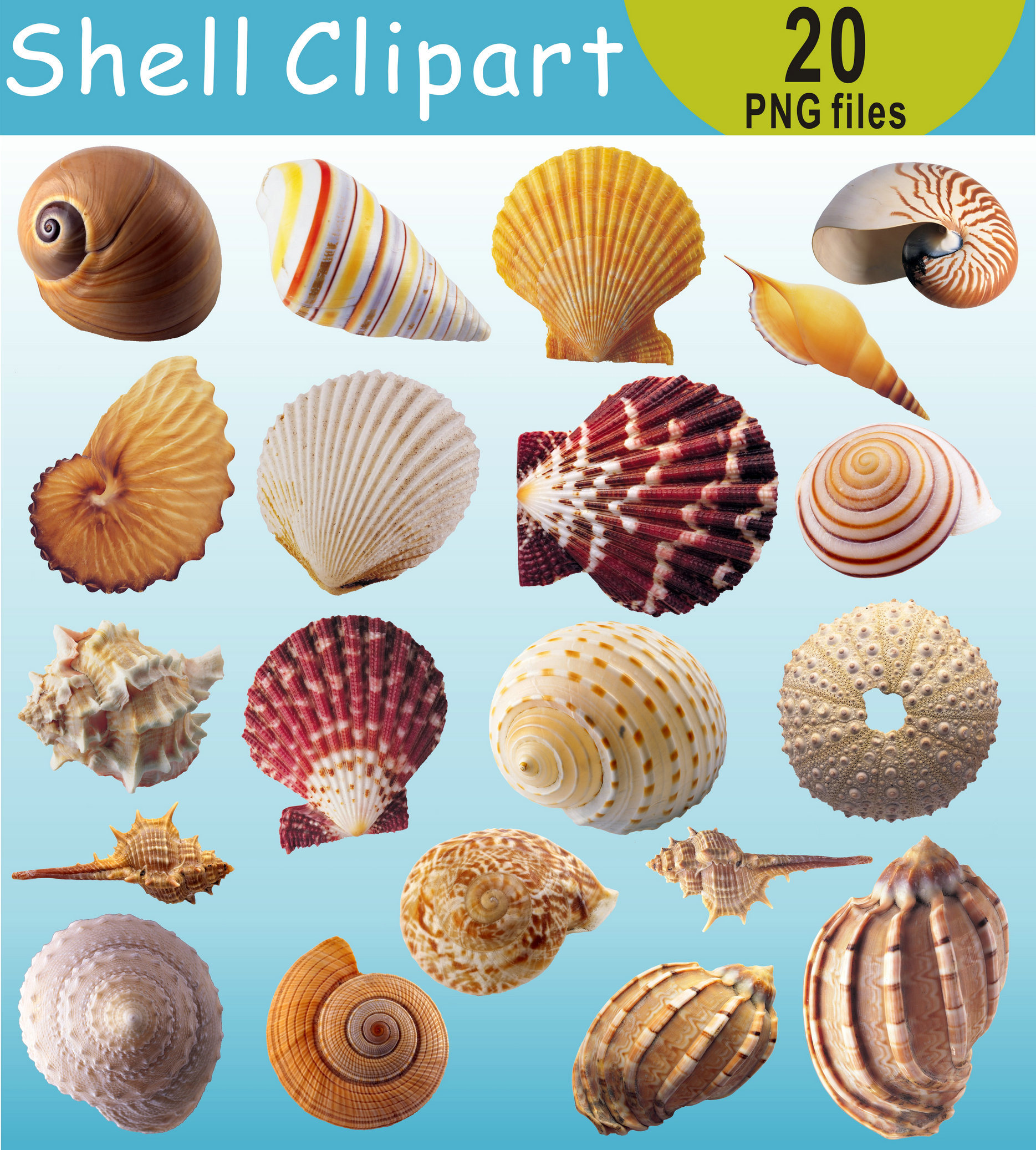 Shell clipart under sea  the Under This Clip