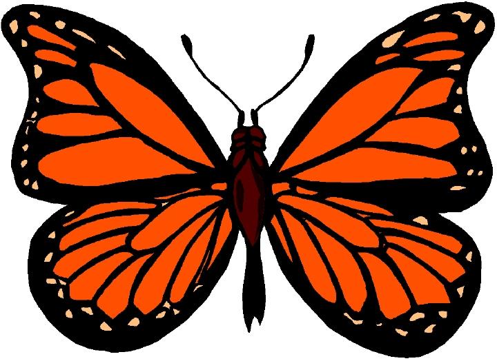 Monarch Butterfly clipart Art Butterfly  #23038 &