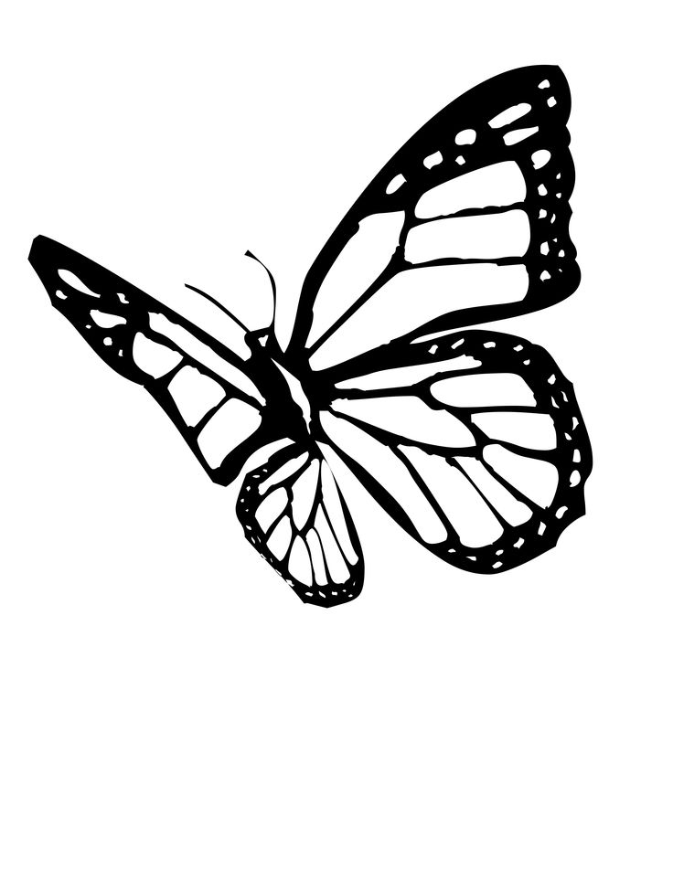 Monarch Butterfly clipart black and white #6