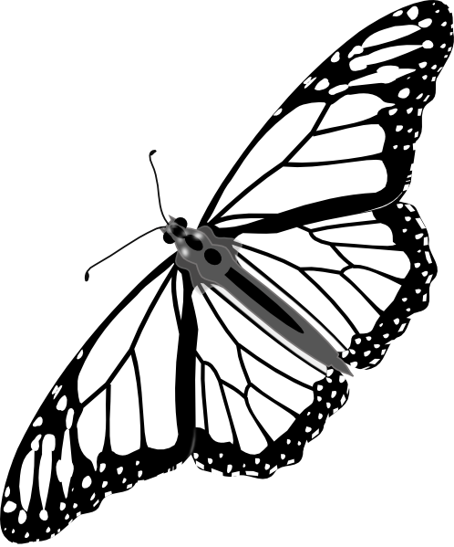 Monarch Butterfly clipart black and white #9